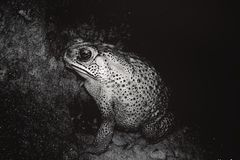 Лягушка на грязи стоковое изображение