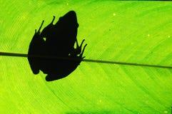 Лягушка на лист Стоковые Фотографии RF
