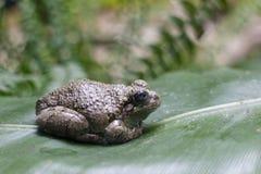 Лягушка на листьях стоковые изображения