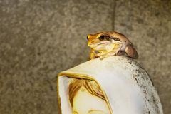 Лягушка на статуе Стоковое Изображение