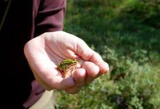 лягушка немногая Стоковые Фото