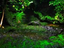 Лягушка отравы от Барселоны в аквариуме стоковые фотографии rf