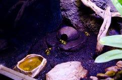 Лягушка отравлением Стоковые Изображения RF
