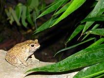 Лягушка под кустом Стоковые Фотографии RF