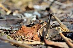 Лягушка под солнцем Стоковое Изображение RF