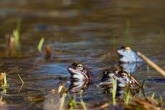 лягушка причаливает стоковая фотография