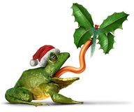 Лягушка рождества Стоковое Фото