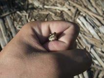Лягушка сидя на его руке стоковое изображение rf