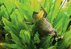 лягушка смешная Стоковые Фото