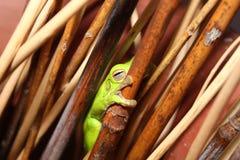 Лягушка спать Стоковые Изображения