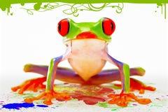лягушка цвета Стоковое Изображение RF