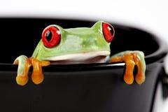 лягушка чашки Стоковая Фотография