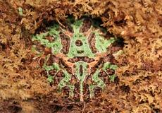 Лягушка человека Pac Стоковые Фото