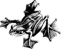лягушка бесплатная иллюстрация