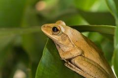 Лягушка Стоковые Фотографии RF