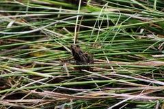 Лягушка na górze травы стоковые фотографии rf