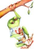 лягушка tarzan Стоковые Фотографии RF