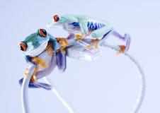 лягушка www Стоковые Фото