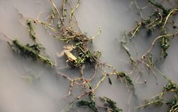 Лягушки в ² е ¾ РкРVylkove (Ð'ил; ¾ ² Ð ¾ РкРÐ'ил; Vâlcov) стоковое изображение rf