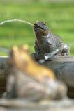 Лягушки как часть фонтана Стоковое фото RF