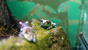 Лягушки на аквариуме Японии, города солнечности стоковые изображения