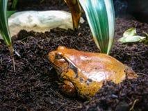 Лягушки отравы стоковое изображение rf