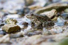 Лягушки сидя на береге Стоковое Изображение RF