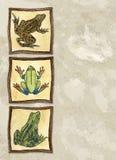 лягушки Стоковое Фото