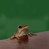 лягушки стоковая фотография rf