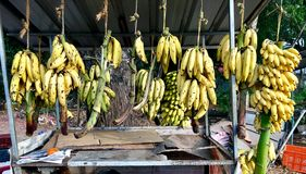 Магазин Керала банана обочины стоковое фото