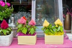 магазин цветка стоковое фото