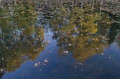 Магнитное отражение осеннего multicolor леса в озере, южного парка стоковые изображения