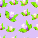 Магнолия Безшовная текстура картины цветков вектор детального чертежа предпосылки флористический Стоковая Фотография