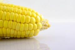 Маис зерна, свежая мозоль Стоковая Фотография