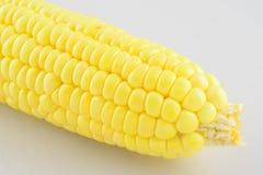 Маис зерна, свежая мозоль Стоковые Изображения