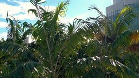 МАЙАМИ, ФЛОРИДА, США - ЯНВАРЬ 2019: Воздушный полет взгляда панорамы трутня над парком города Miami Beach Soundscape акции видеоматериалы