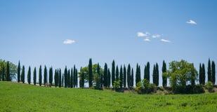 Майна выровнянная с деревьями кипариса в Тоскане Стоковые Изображения RF