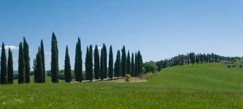 Майна выровнянная с деревьями кипариса в Тоскане Стоковая Фотография RF