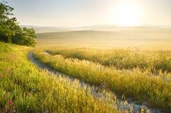 Майна в луге и восходе солнца Стоковая Фотография RF