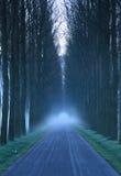 Майна деревьев Стоковая Фотография RF