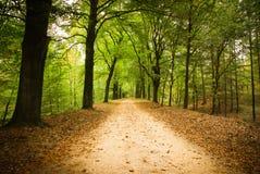 Майна леса Стоковое фото RF