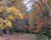 Майна страны Вермонта в осени Стоковое фото RF