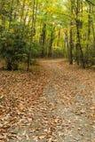Майна страны покрытая с листьями осени Стоковые Фото