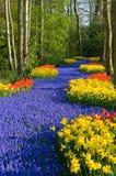 майна цветка Стоковые Изображения