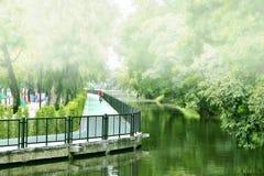 Майны велосипеда в дереве парков зеленом Стоковые Изображения