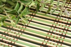 майоран травы предпосылки bamboo свежий Стоковые Фото