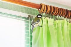 Майор Parus Птица в доме стоковые фотографии rf