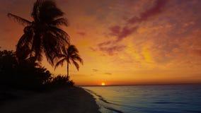 Майяские пальмы Ривьеры приставают восход солнца к берегу в карибской Мексике сток-видео