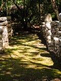 Майяские руины в джунглях Стоковое фото RF
