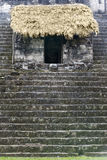 Майяские руины в джунглях Tikal стоковое изображение rf